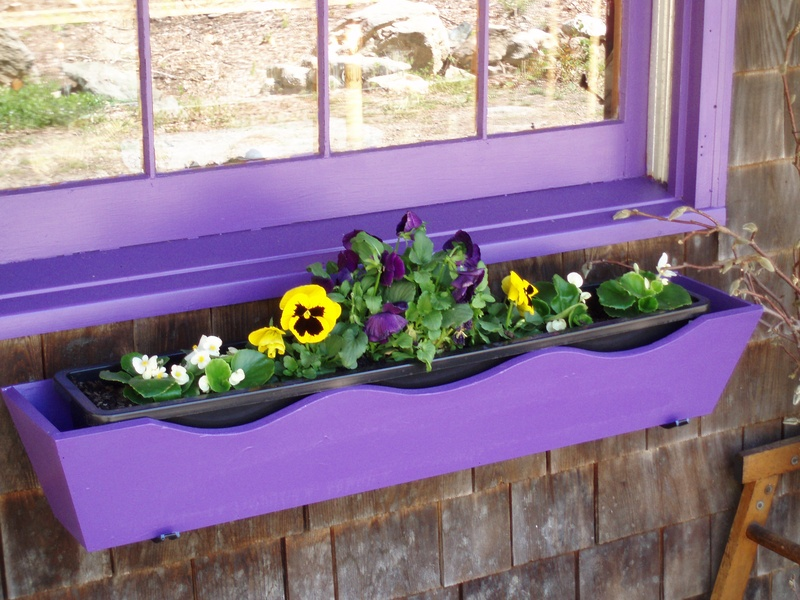 Purple window boxes full of flowers!